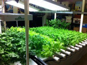 indoor_gardening